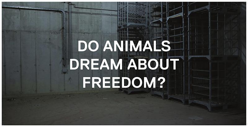 Do-Animals,-Grubić